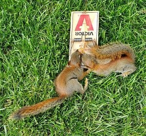 Squirrels 5 20 20.jpg