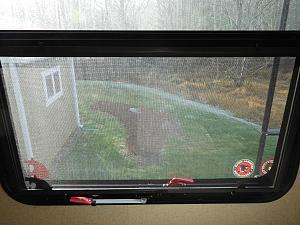 Rear Window 1.jpg