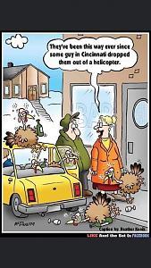 wkrp turkeys.jpg