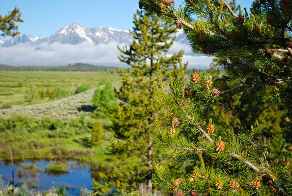 Yellowstone 2015 (249 of 251)
