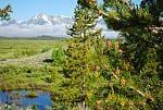The Grand Tetons/Yellowstone 2015