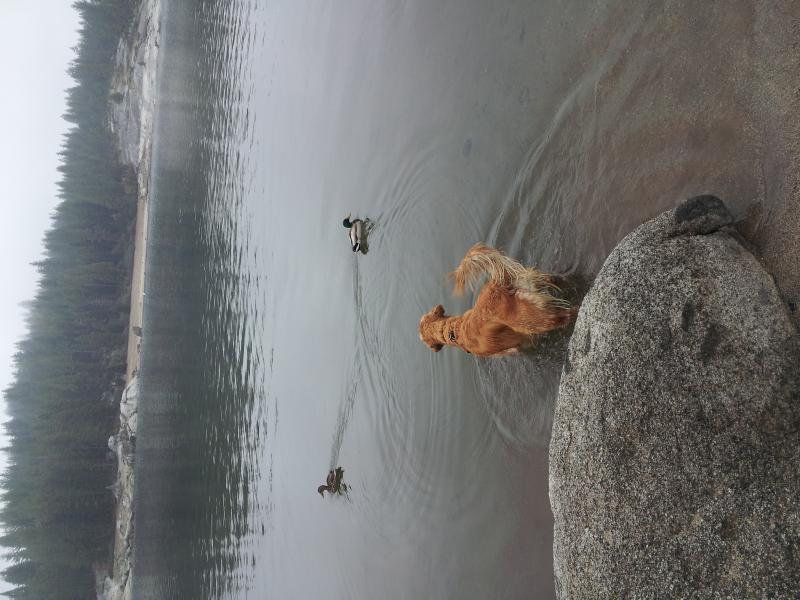 Shaver Lake 5 3 13 (5)