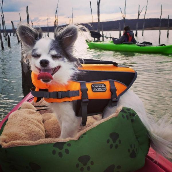 Skippy kayaking