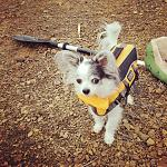 Skippy in his life jacket
