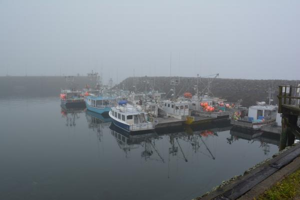 Fog over Brier Island Harbour