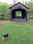 Oldest covered bridge in NY