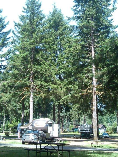 Beautiful RV park in Olympia, Wa.