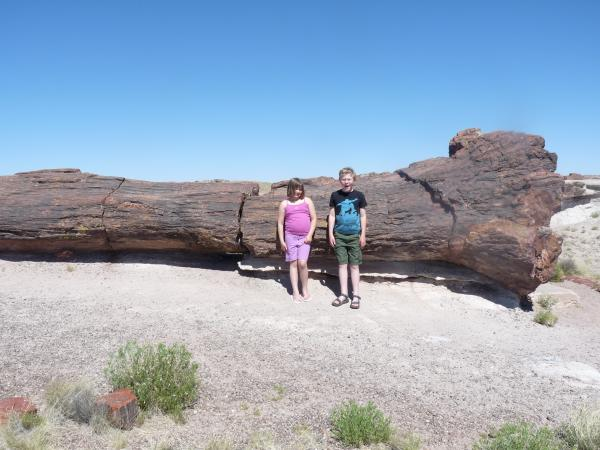 Kids in front of petrified tree inside Petrified Forest National Park - Holbrook, AZ