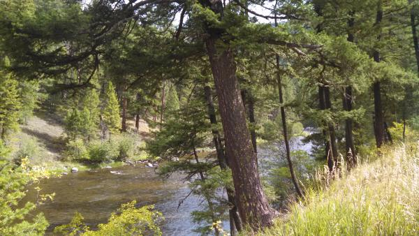 Rock Creek from the Dalles Campground