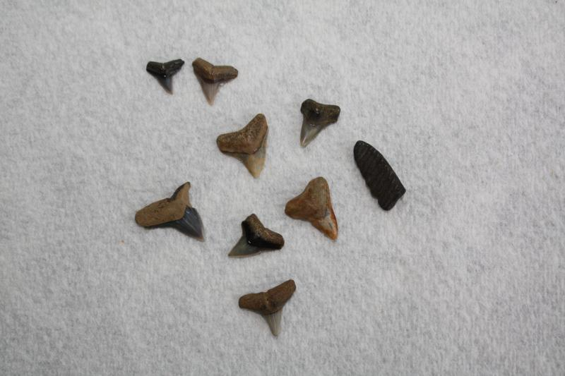 Westmoreland SP 2013 