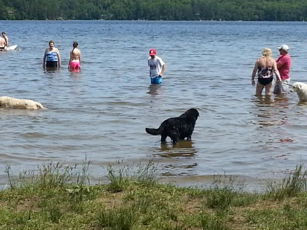 Abby (Black Lab) enjoying herself at the off leash Dog Beach area.