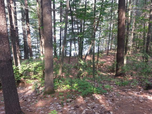 The lake through the trees from our new site 121.