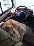 Backup Driver