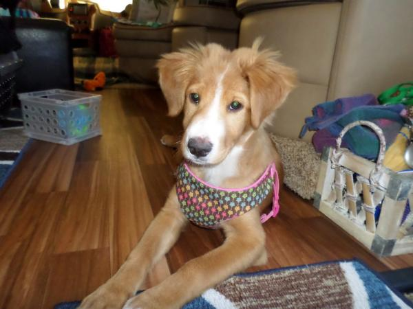 """K.C. @ approx. 3 1/2MO.  At home in Bertha..1st """"dress"""" July, 2016, South Fork, CO"""
