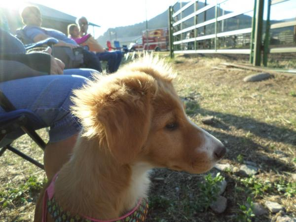 "K.C. @ her first rodeo...Those horses are really ""big""