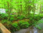 creek behind campsite 5-27-15