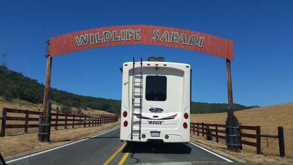 Wildlife safari in Winston, or   Animals roam free