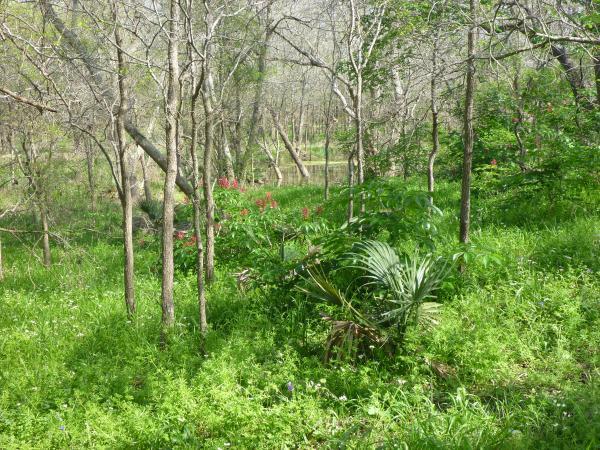 Marsh behind site