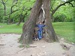Juli in a tree