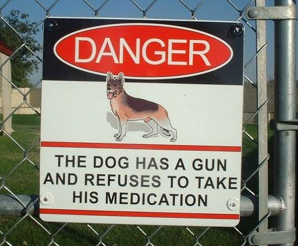 the dog has a gun