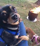 Enjoying a campfire in Western MI.